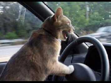 Laura Driving