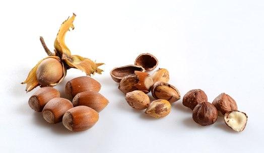 1200px-Corylus_avellana_ripe_nuts